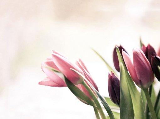 Thème fleurs boutique fleuriste