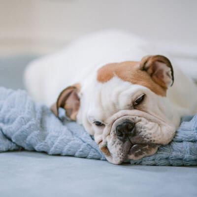 Thème WordPress Dog Sitting